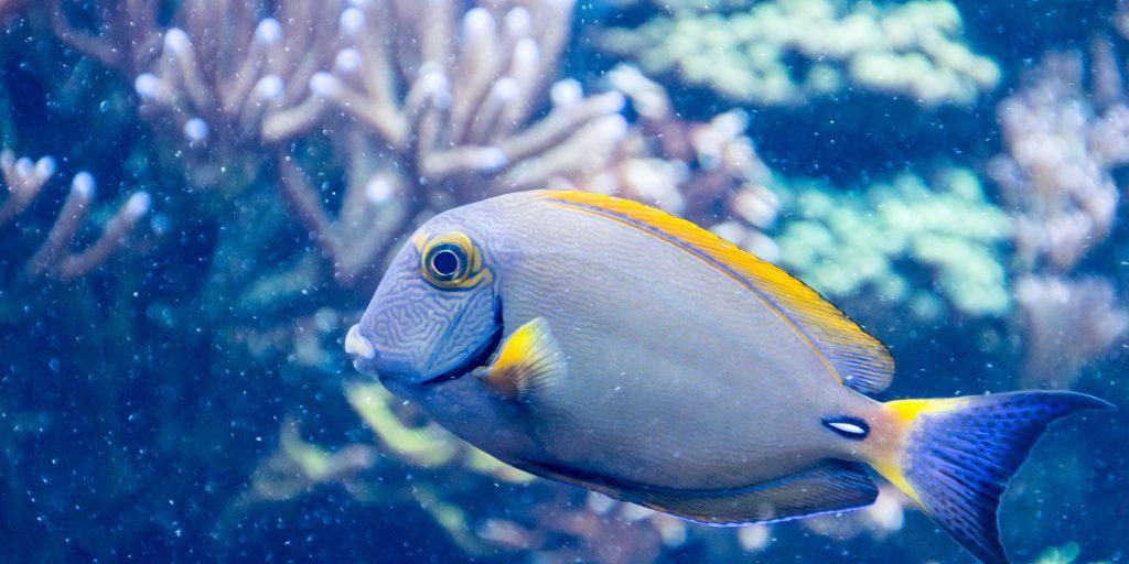 Trends in Aquaculture